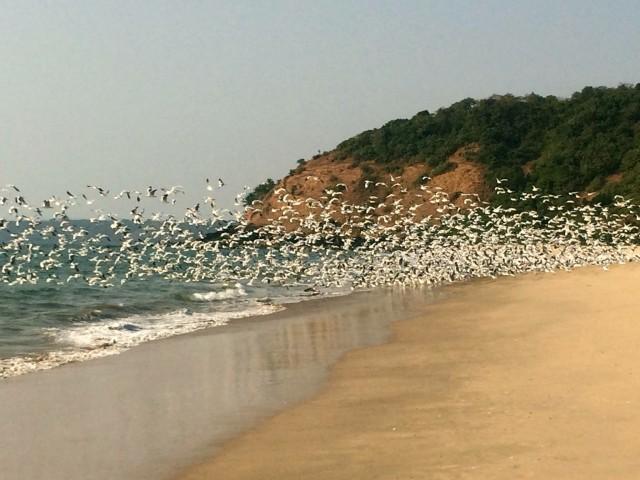 Мочемад пляж в Махараштре