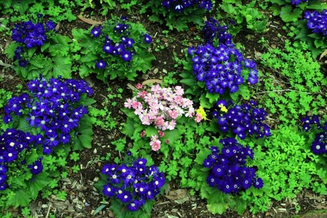 Араулен ботаническай сад