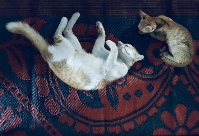 Благодарные котики