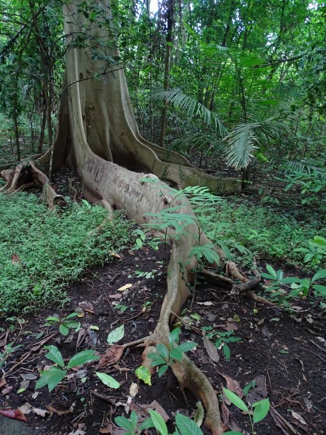 Интерьер леса