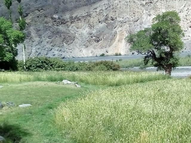 пшеничные поля в кишлаке Барчедив