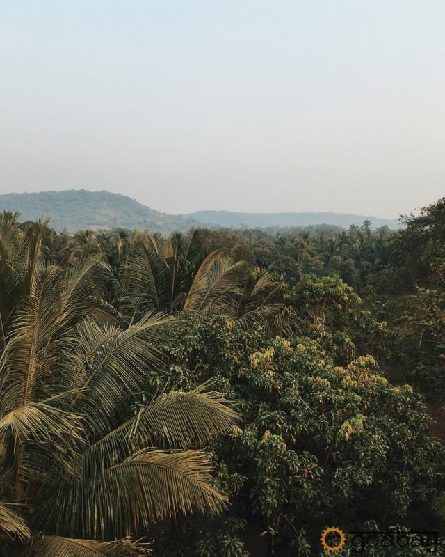 GoaBay Индия Джунгли