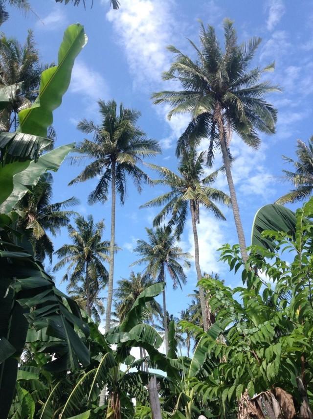 Пальмы острова Миндоро