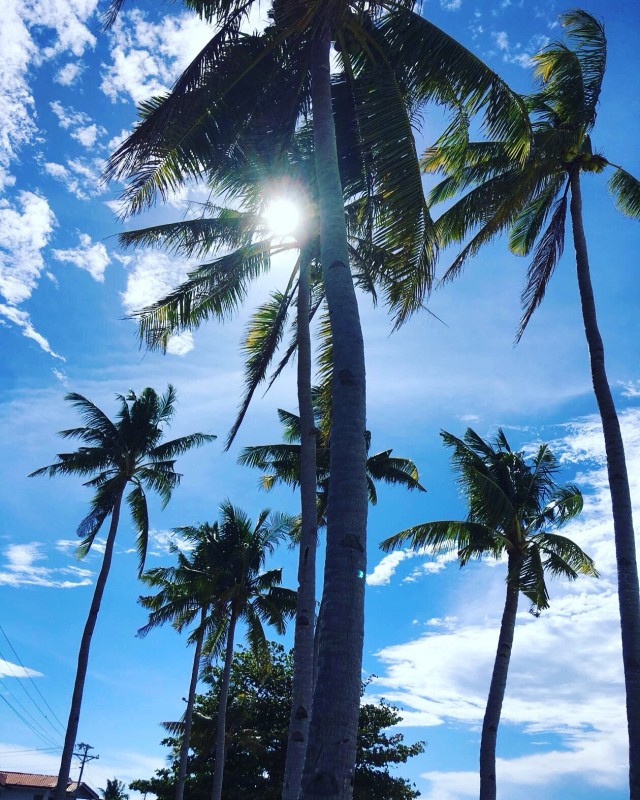 Пальмы Малапаскуа