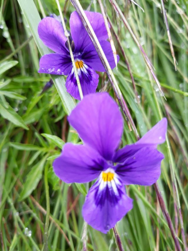 цветочки всякие