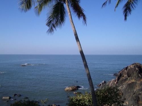 пальма, море