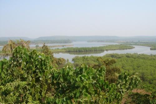 крокодильи болота