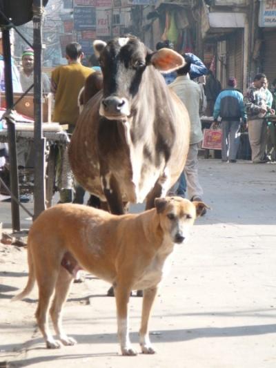 коровка с собакой, Мэйн базар