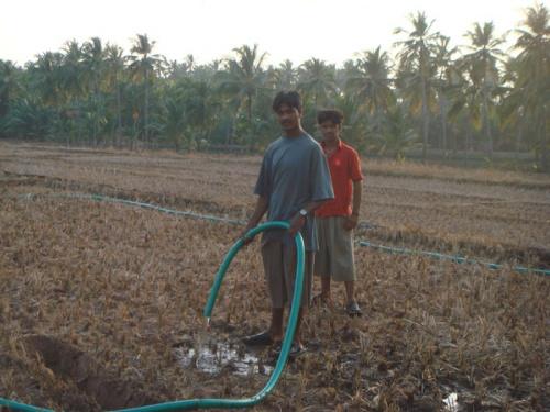 вечерний полив риса