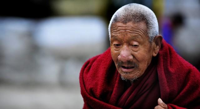 тибетец old , Драмсала