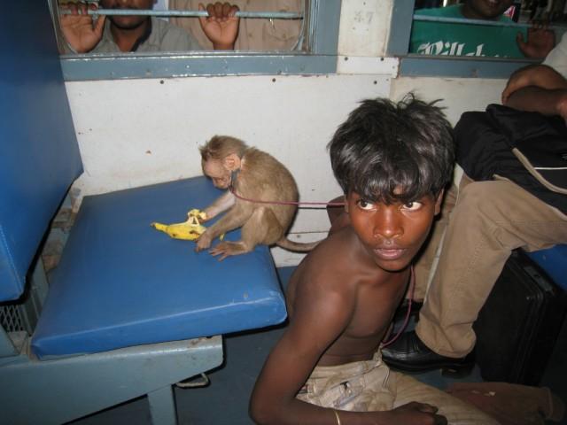 Повелитель обезьян