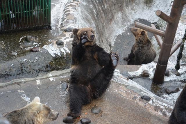 привет, медвед