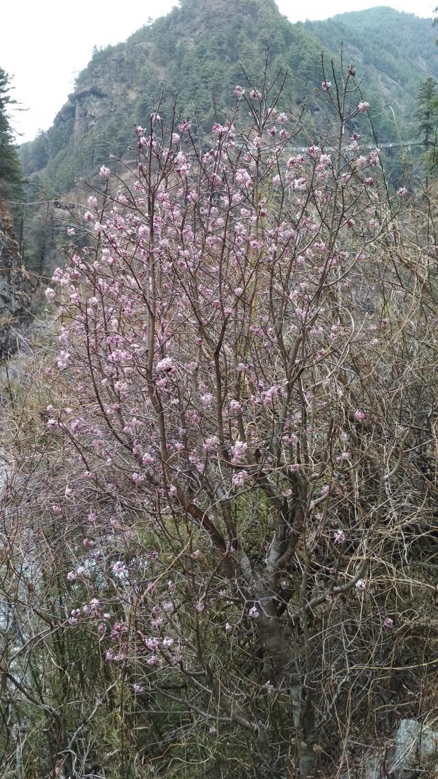 Весна. Что-то начинает зацветать.