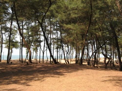 Лесок перед пляжем Paradise (Махараштра)
