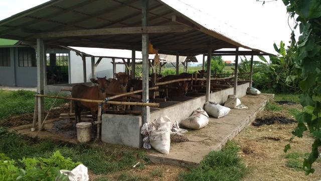 Телки на Бали