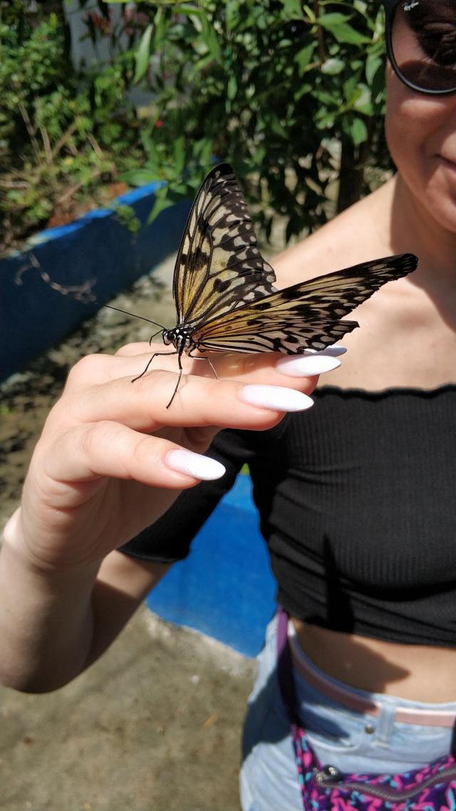 Знаменитая ферма бабочек