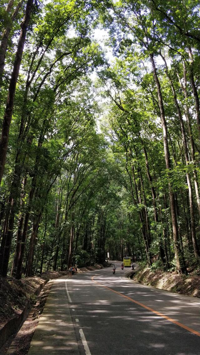 Знаменитый лес Махагони
