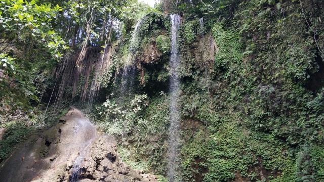 Где-то в джунглях Бохоля