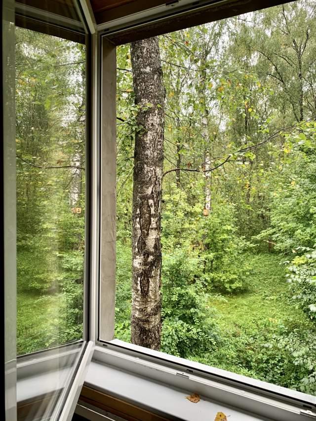 Дома из окна тоже неплохой вид