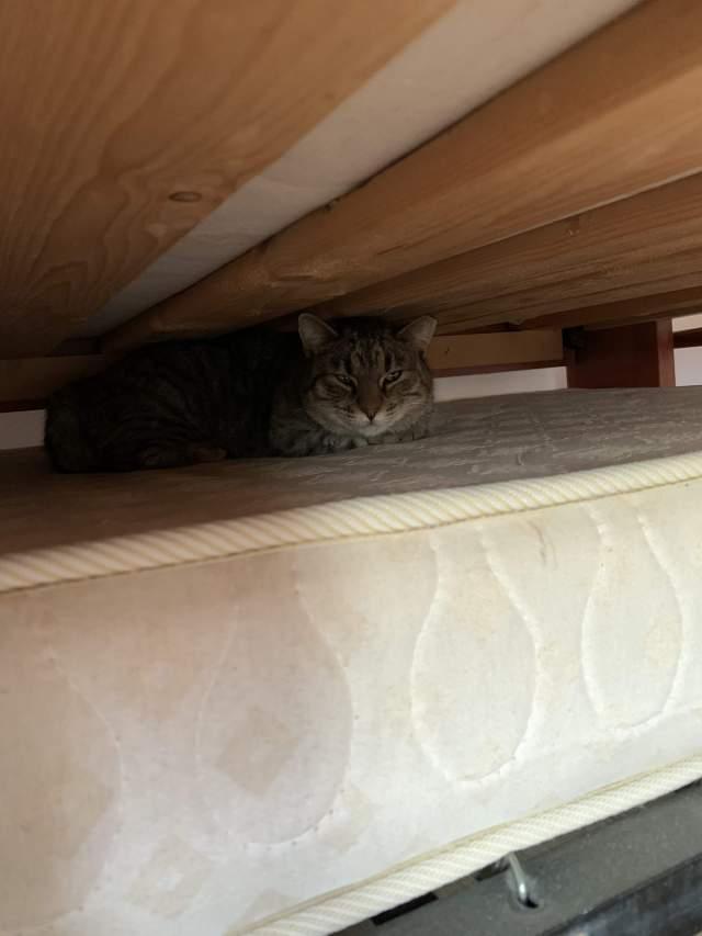 сначала забилась под мою кровать