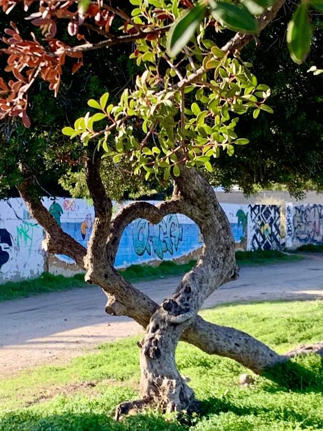 это два разных дерева, но издалека видно 🧡