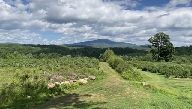 Черничные поля с видом на горы
