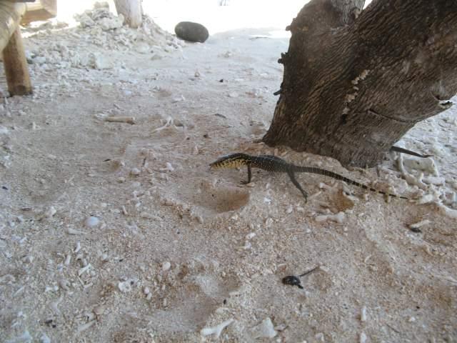 Ящер в Бунге