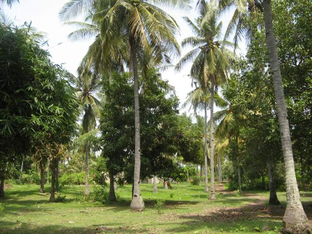 Пустыри внутри острова