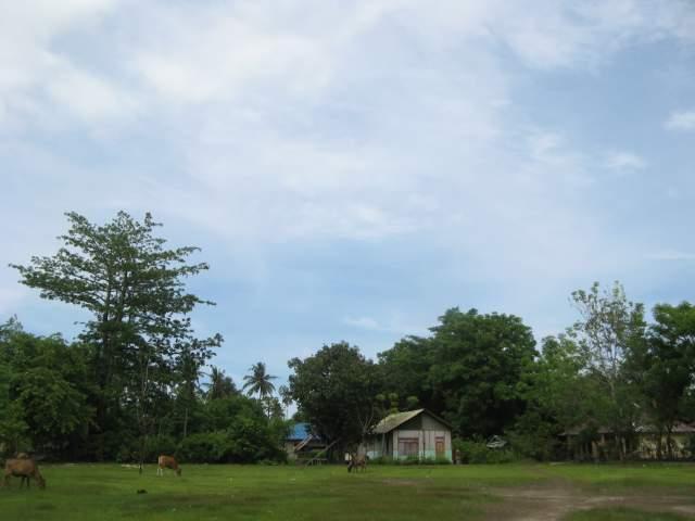 Поле в центре островка