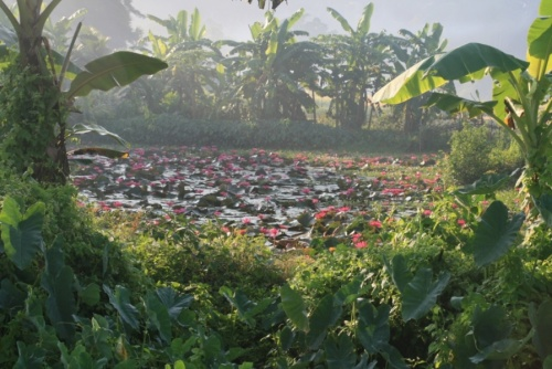 Озеро в джунглях