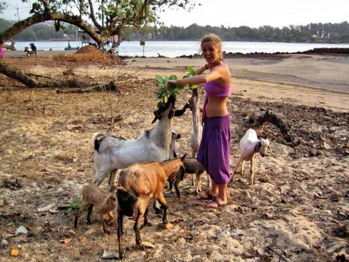 тираколь форт_голодные овечки