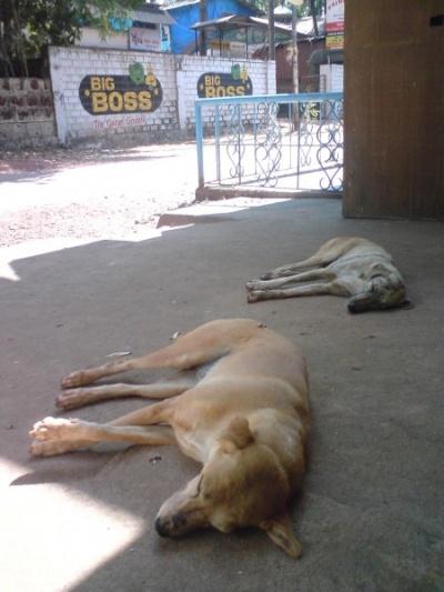 спят :)