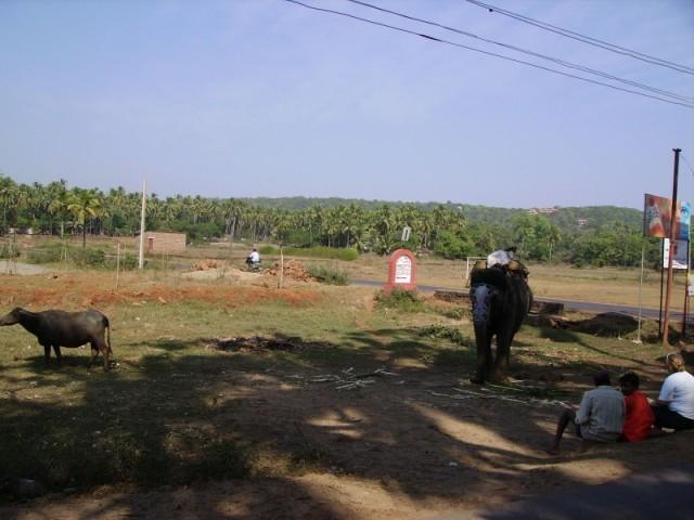 Слон недалеко от Arpora (Вроде как)