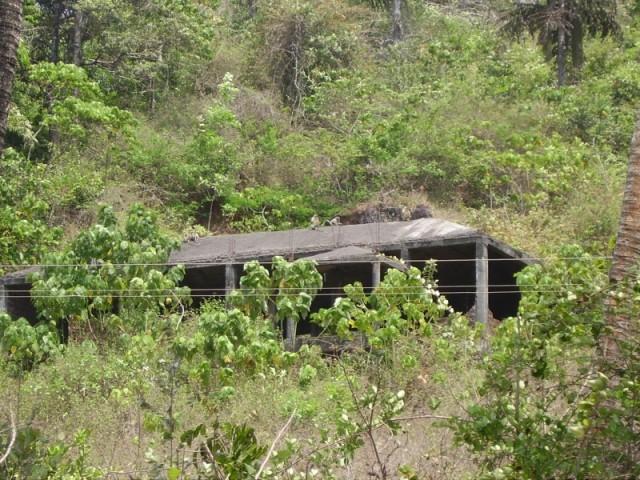 Обезьяны вдоль дороги Chapora-Siolim