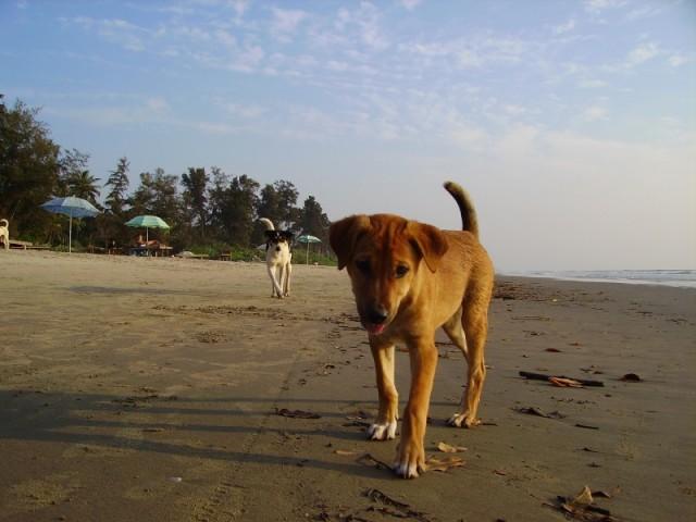 Собаки в Ashwem