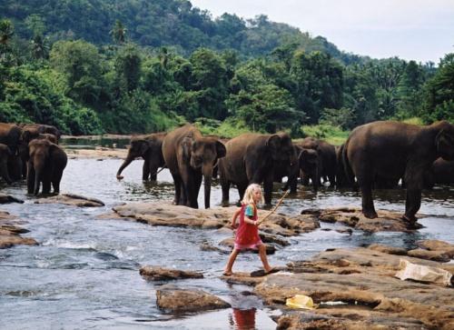 Купание слонов в питомнике Пиннавела - их здесь можно наблюдать на расстоянии вытянутой руки (а эта девчушка вообще пасет гигантов :)