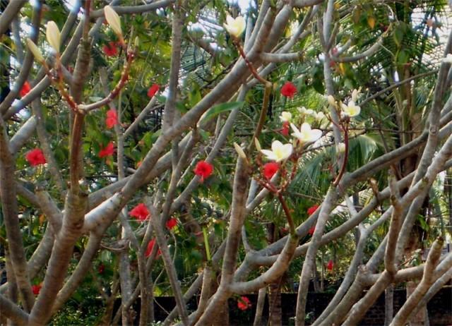 Листьев - нет, цветы - есть...