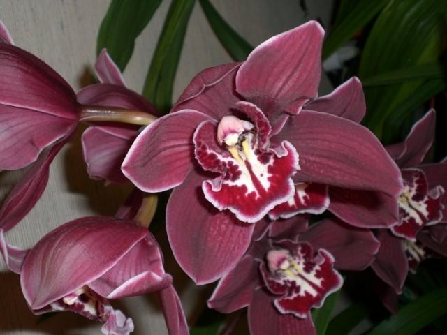 Еще орхидея