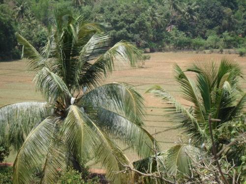 Мимо рисовых полей