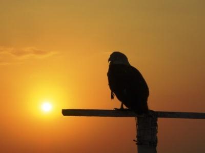 Falcon's (наверное узнаете - рядом с лодочкой)