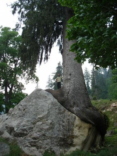Исследуем флору и фауну Гималаев