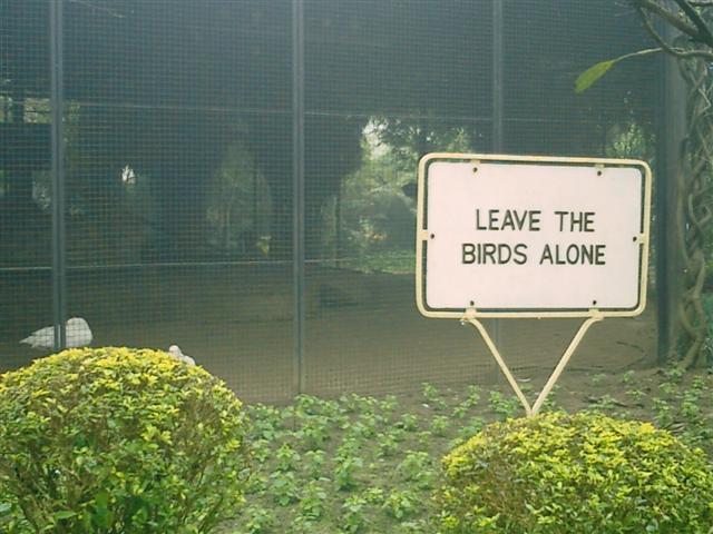 - бедные птички