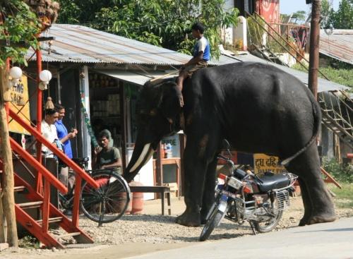 На слоне лучше, чем на мотоцыкле..