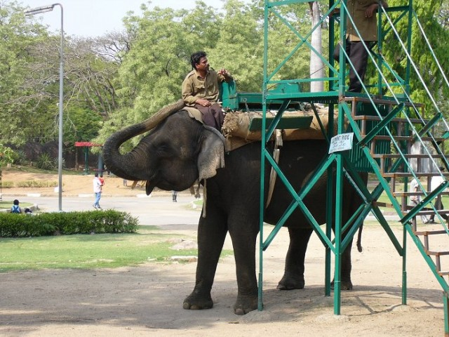 Слон хайдерабадский