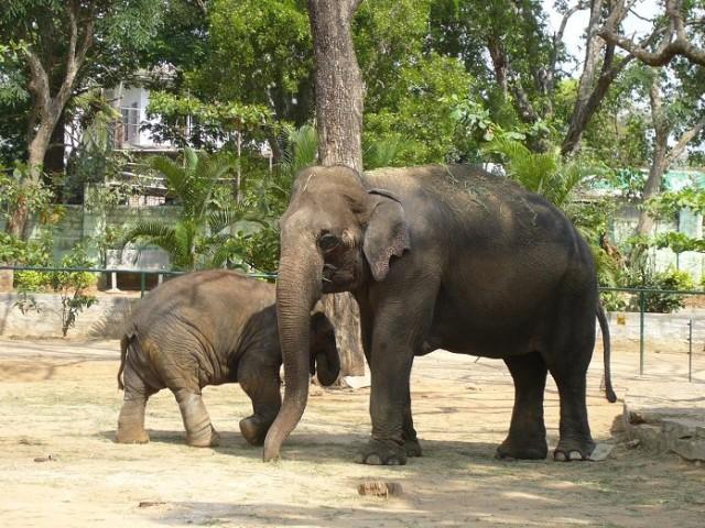 Слоники бангалорские