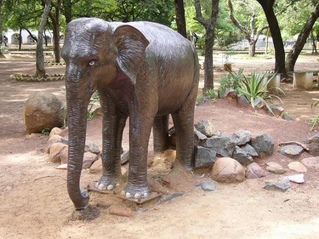 Слон ченнайский :)