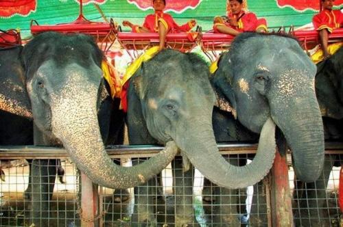 А  это слоны с другого сайта. Не удержалась, чтобы не вставить сюда.