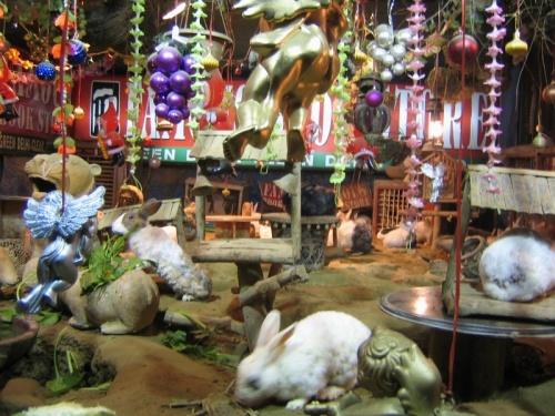 Кролики в Дели