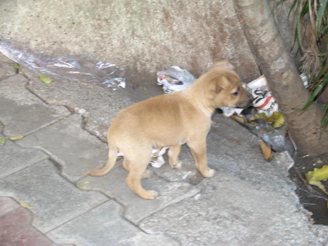 Маленька собака в Пуне, которая ходила за мной пол дня...