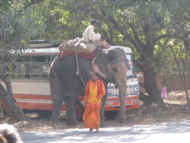 Слон возле Анджуны.